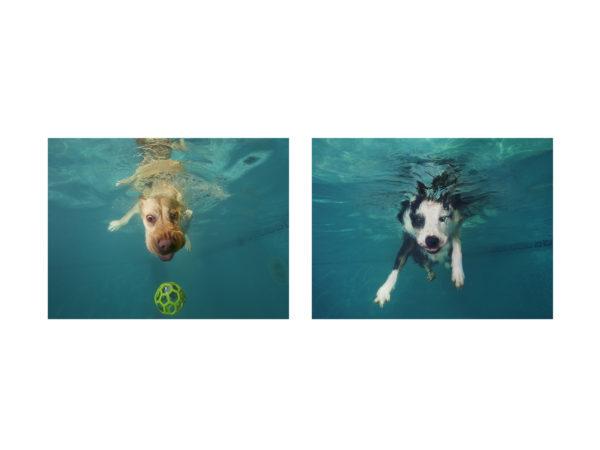 IAMS underwater dogs, June 2018
