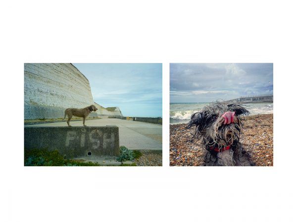Kitty and Poppy liked Brighton, October 2016