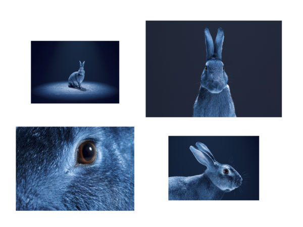 'Follow the Rabbit' for O2, January 2017.